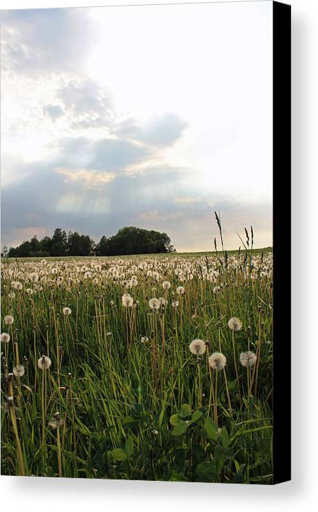 Field Canvas Print featuring the photograph Field Of Wishes by Becca Brann