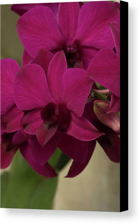 Flowers Canvas Print featuring the photograph Flower 127 by Larry Palmer