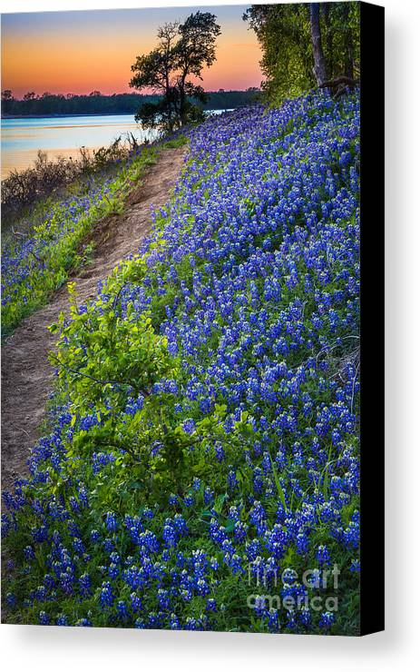 America Canvas Print featuring the photograph Flower Mound by Inge Johnsson