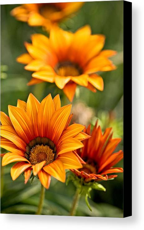 Floral Canvas Print featuring the photograph Flowers by Carl Jackson