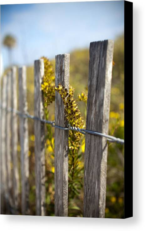 Wildflowers Canvas Print featuring the photograph Folly Beach Wild Flowers by Dustin K Ryan