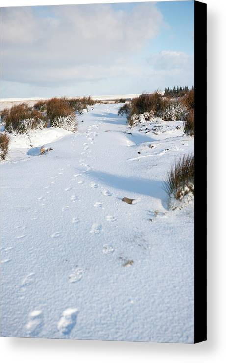 Winter Canvas Print featuring the photograph Footprints In The Snow V by Helen Northcott
