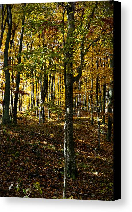 Trees Canvas Print featuring the photograph Forest Floor Two by Tim Nyberg