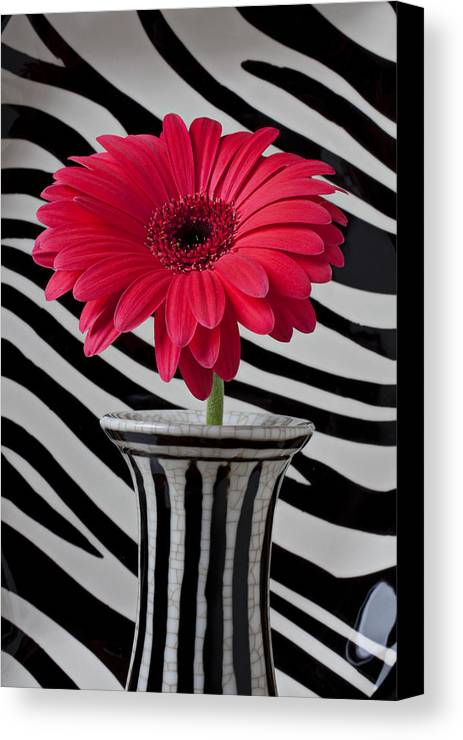 Gerbera Daisy In Striped Vase Canvas Print Canvas Art By Garry Gay
