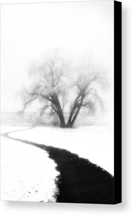 Tree Canvas Print featuring the photograph Getting There by Marilyn Hunt