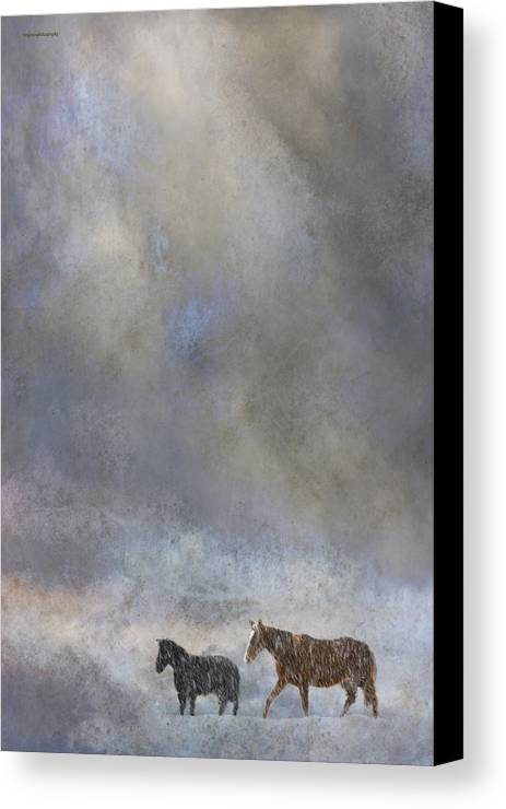 Winter Canvas Print featuring the photograph Going To Barn by Ron Jones