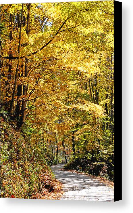 Fall Foliage Canvas Print featuring the photograph Golden Road by Alan Lenk