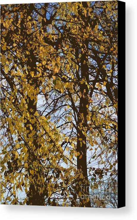 Autumn Canvas Print featuring the photograph Golden Tree 2 by Carol Lynch