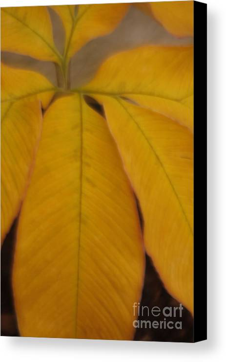 Leave Canvas Print featuring the photograph Golden Umbrella by Katherine Morgan