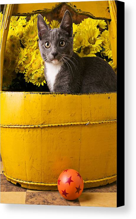 Kitten Canvas Print featuring the photograph Gray Kitten In Yellow Bucket by Garry Gay