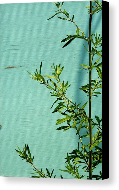 Green Canvas Print featuring the photograph Green On Aqua 1 by Art Ferrier