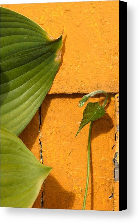 Color Canvas Print featuring the photograph Green On Orange 4 by Art Ferrier