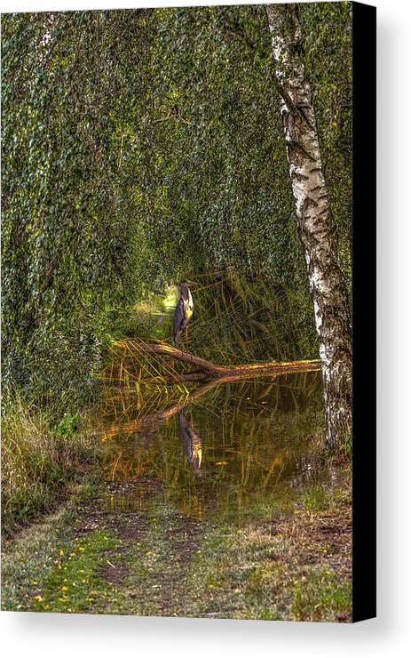 Heron Canvas Print featuring the photograph Heron On Path #g7 by Leif Sohlman