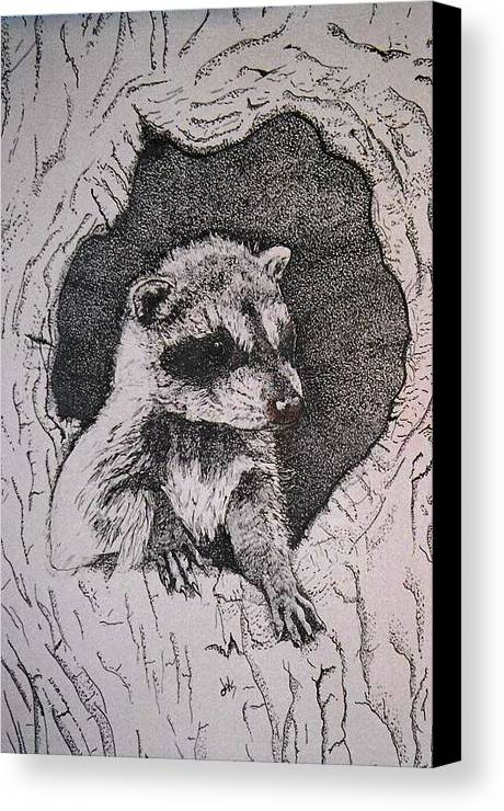 Raccoon Canvas Print featuring the drawing Home by Debra Sandstrom