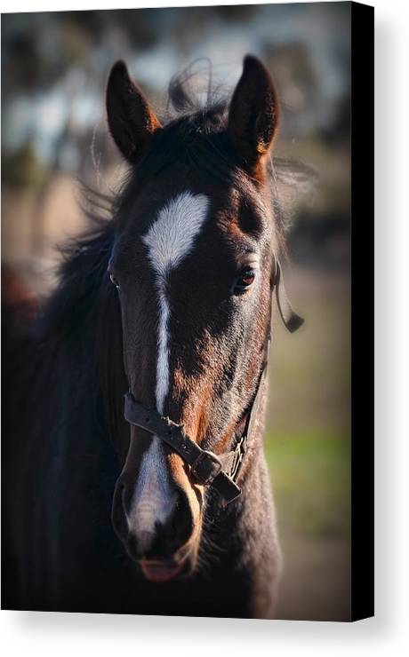 Horse Canvas Print featuring the photograph Horse Whispering by Georgiana Romanovna