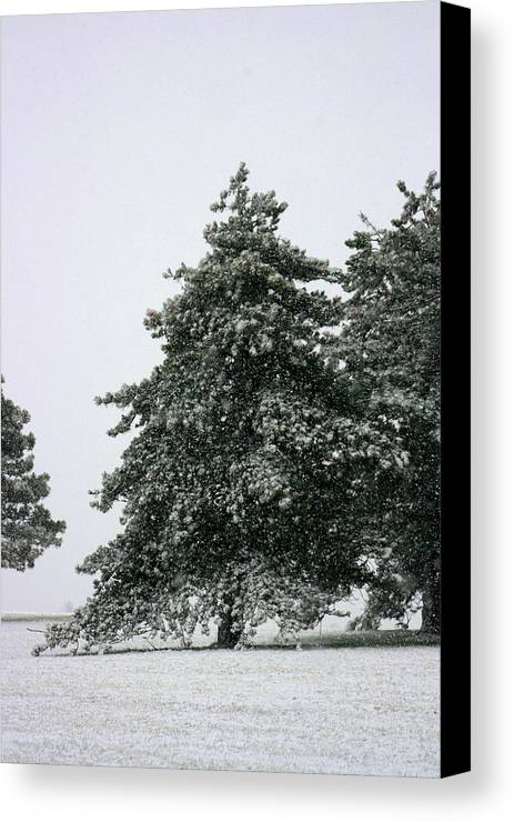 Frost Canvas Print featuring the photograph How Picturesque by David Dunham