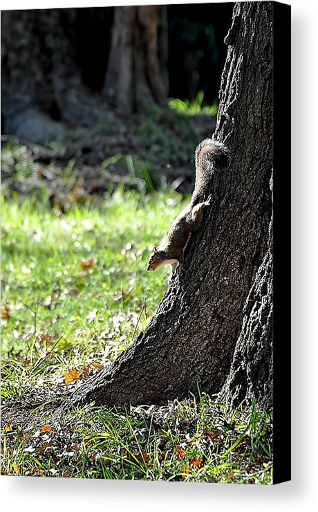 Animals Canvas Print featuring the photograph Hunting Acorns by Jan Amiss Photography