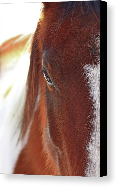 Animal Canvas Print featuring the photograph I Got My Eyes On You by Evelina Kremsdorf