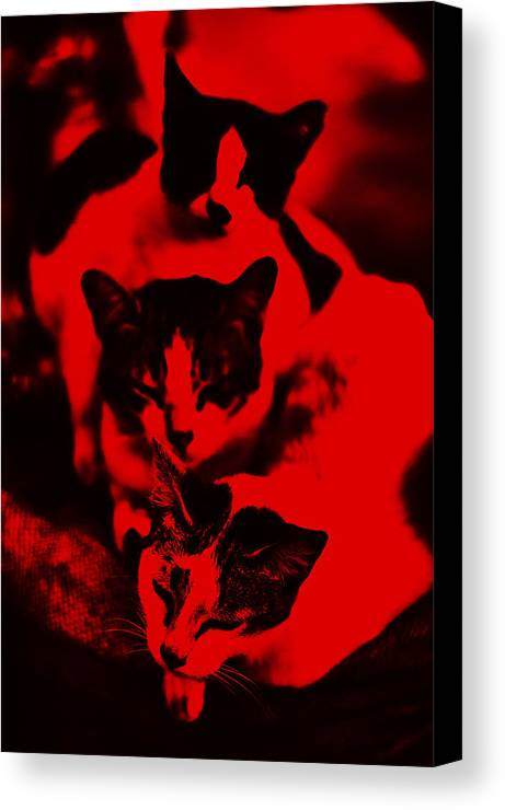 Red Canvas Print featuring the photograph Incubating by Nonoy Federico