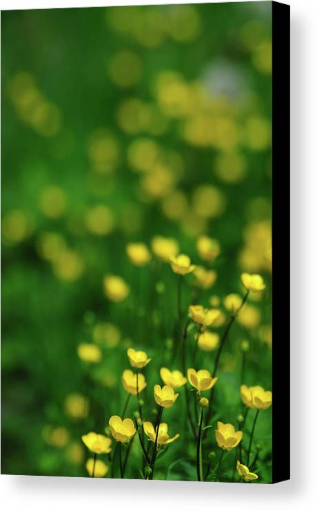 ## Photography ## Canvas Print featuring the photograph Infinity... by Durk Talsma