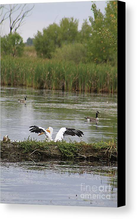 Animal Canvas Print featuring the photograph Into The Water by Alyce Taylor