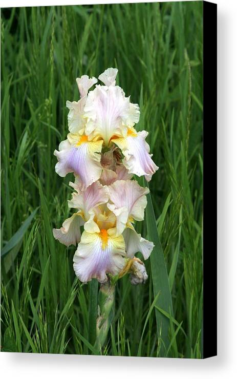 Flower Canvas Print featuring the photograph Iris In Grass by George Ferrell