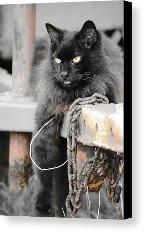 Wagon Canvas Print featuring the photograph Just Hanging Out by Lynda Dawson-Youngclaus