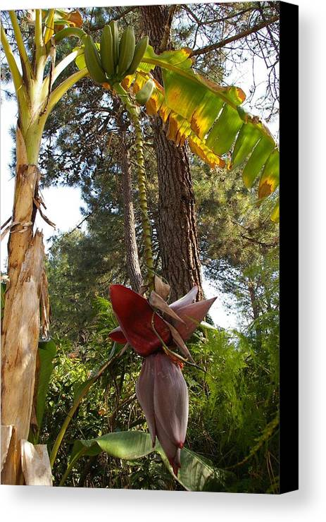 Garden Canvas Print featuring the photograph Just Hanging by Veron Miller
