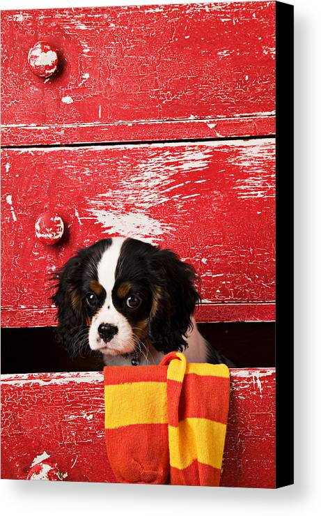 Puppy Canvas Print featuring the photograph King Charles Cavalier Puppy by Garry Gay