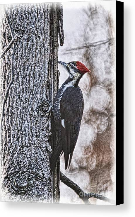 Woodpecker Canvas Print featuring the photograph Knock Knock by Lois Bryan