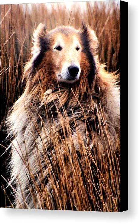 Dog Canvas Print featuring the photograph Laddie In Charge by Ellen Lerner ODonnell