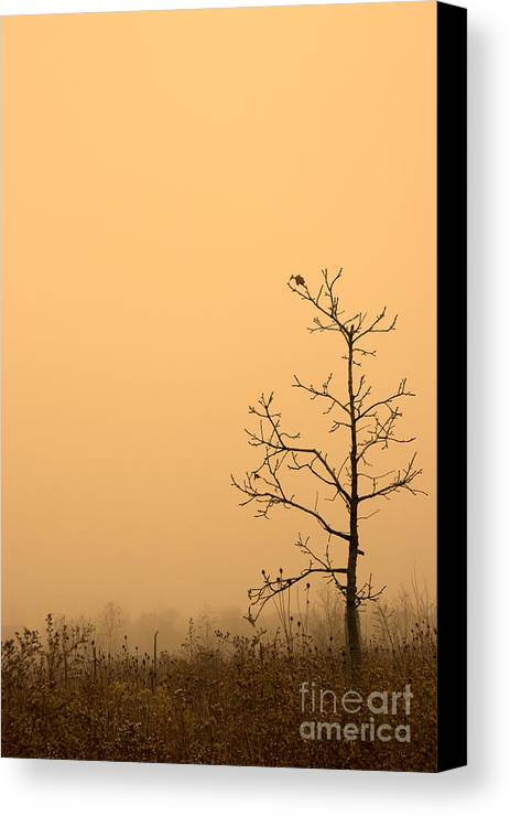 Tree Canvas Print featuring the photograph Last Leaves by Timothy Johnson