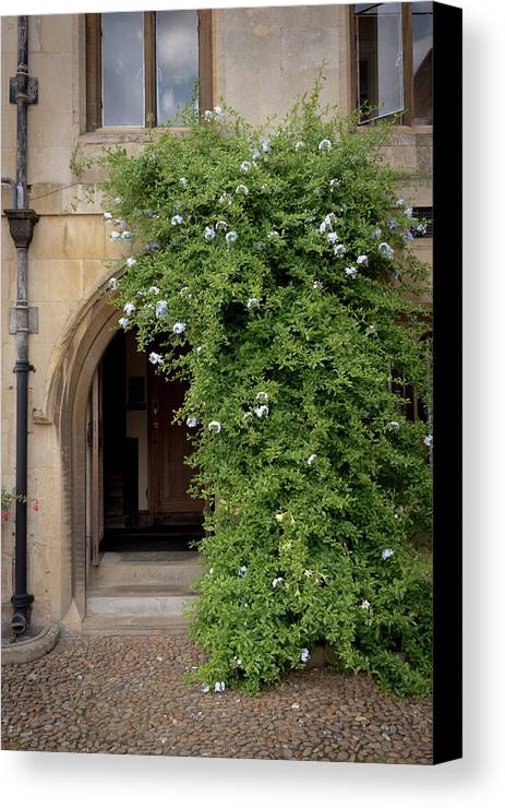 Cambridge Canvas Print featuring the photograph Leafy Archway by Monika Tymanowska