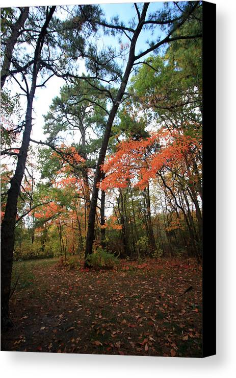 Fall Canvas Print featuring the photograph Leafy Pathway by Mary Haber