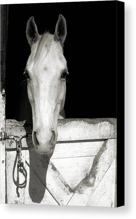 Horse Canvas Print featuring the photograph Let's Go Ride by JAMART Photography