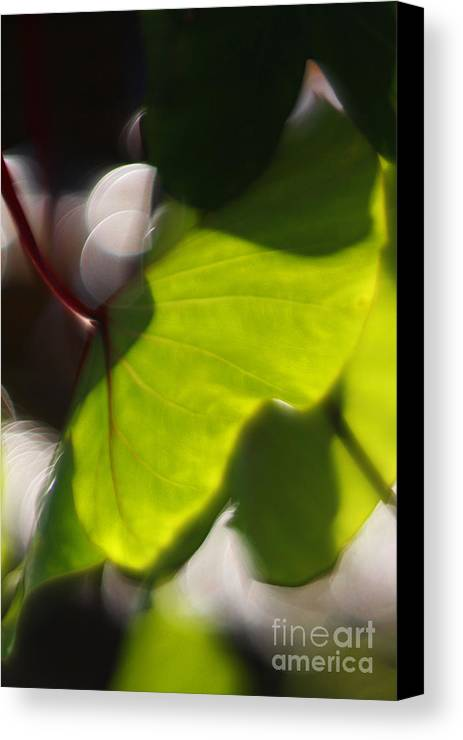 Green Canvas Print featuring the photograph Light I by Katherine Morgan