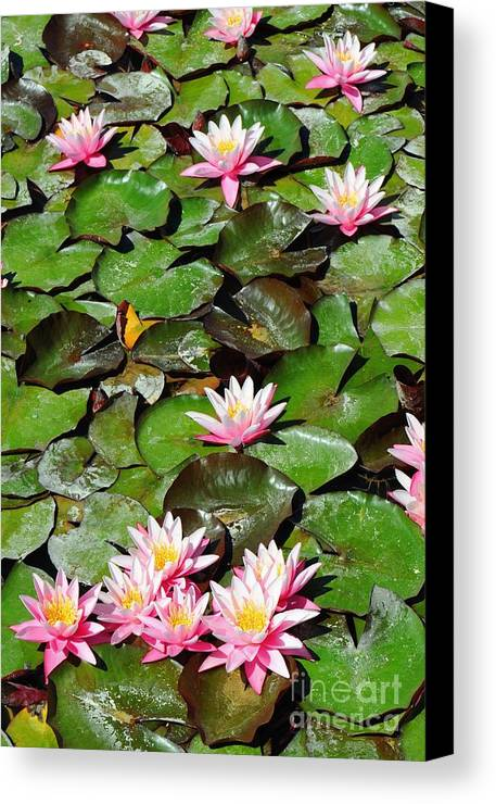 Flower Canvas Print featuring the photograph Lilly Pads In Bloom by Dennis Hammer