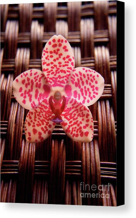 Nature Canvas Print featuring the photograph Lines And Dots by Julia Hiebaum