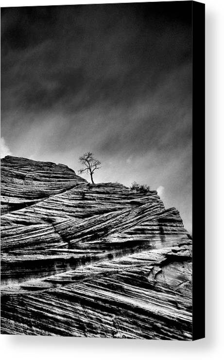 B&w Canvas Print featuring the photograph Lone Tree Rid by Sarah-jane Laubscher