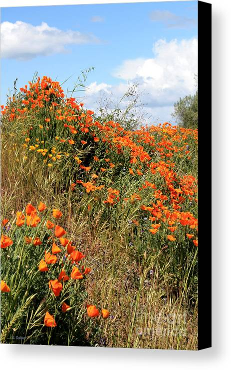 Poppies Canvas Print featuring the photograph Look To The Sky by Gail Salitui