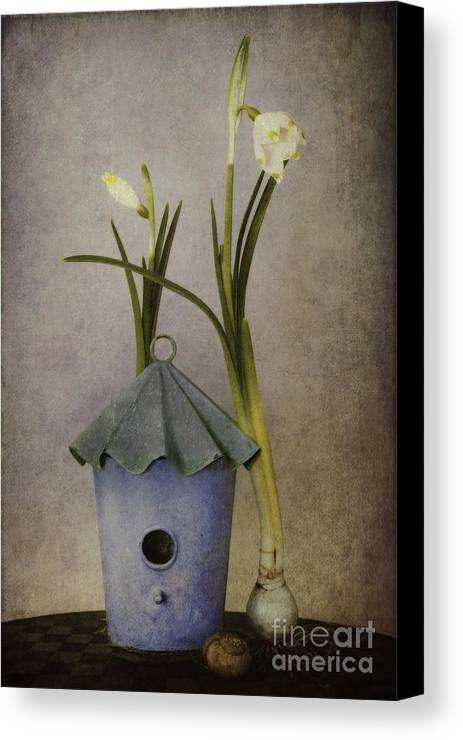 Still Life Canvas Print featuring the photograph March by Priska Wettstein