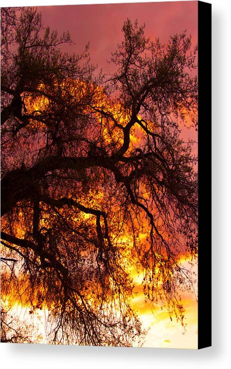 Sunset Canvas Print featuring the photograph May One Sunset by James BO Insogna