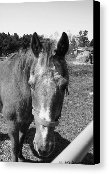 Horse Canvas Print featuring the photograph Mcdonald 5 by Lisa Johnston
