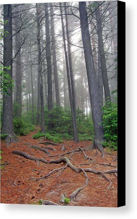 Ontario Canvas Print featuring the photograph Misty Morning In An Algonquin Forest by Peter Pauer