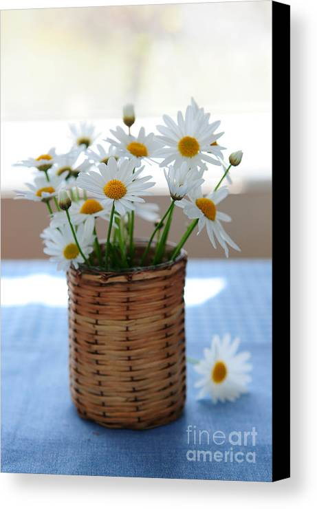 Daisy Canvas Print featuring the photograph Morning Daisies by Elena Elisseeva