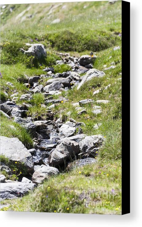 Creek Canvas Print featuring the photograph Mountain Creek by Lasse Ansaharju