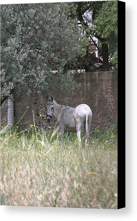 Photographer Canvas Print featuring the photograph My Field by Jez C Self