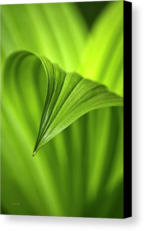 Nature Canvas Print featuring the photograph Nature Unfurls by Christina Rollo