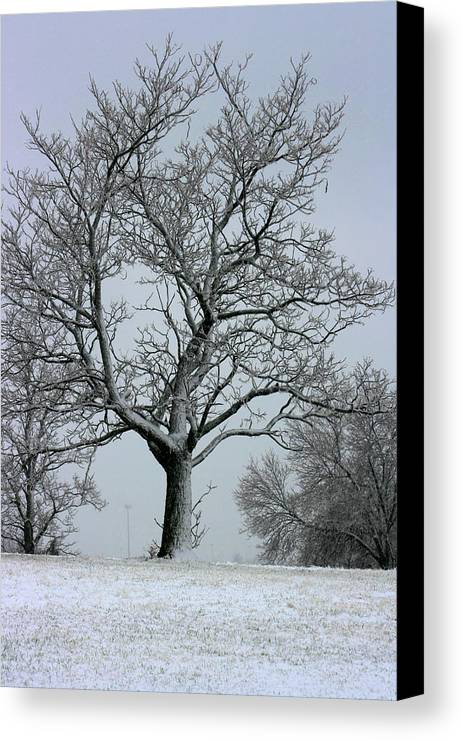 Frost Canvas Print featuring the photograph Nicely Frosted by David Dunham