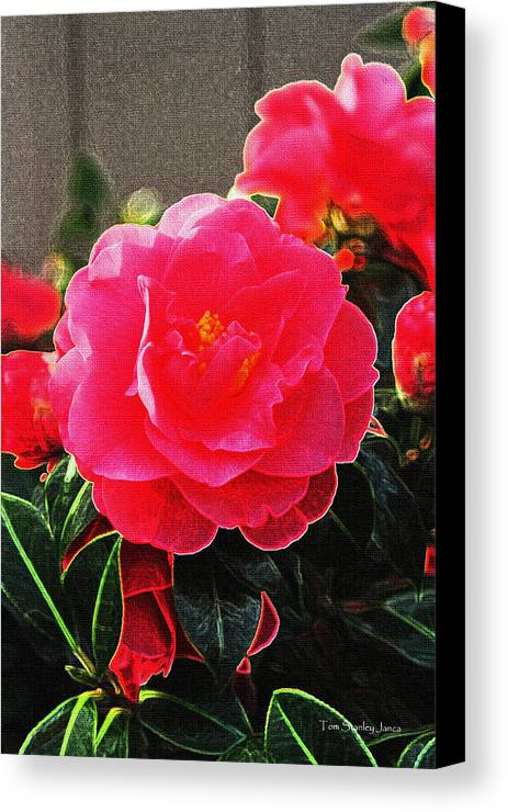 Not A Rose Canvas Print featuring the photograph Not A Rose by Tom Janca